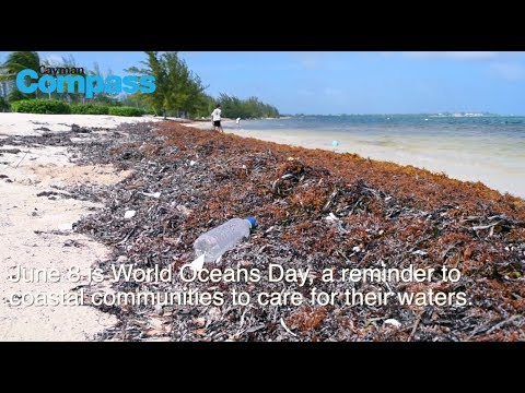 World Oceans Day - #Take5Cayman