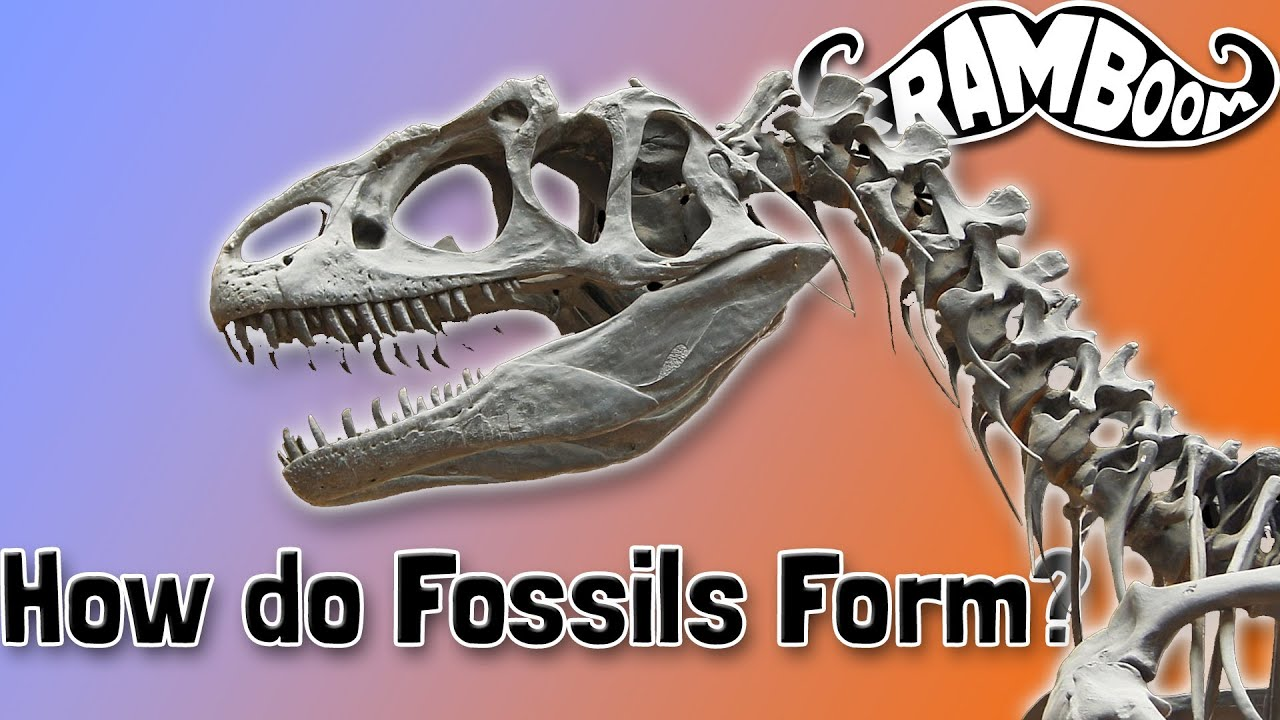 How do Fossils Form? - YouTube