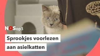 Deze katten houden van sprookjes | NOS op 3