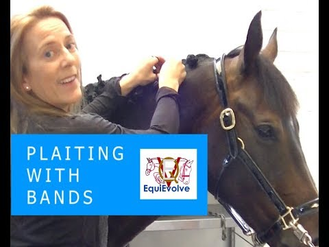 How To Plait A Horses Mane With Bands