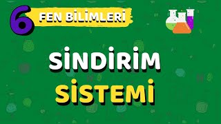 6.Sınıf Fen Bilimleri Sindirim Sistemi-Yardımcı Öğretmen