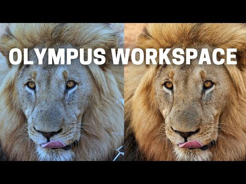 Olympus Workspace - The Best Editing Software For Beginners Using Olympus Cameras