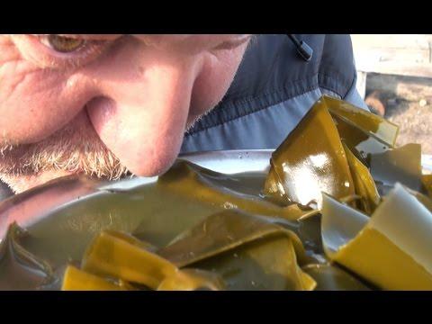 Морская капуста - вкусно и полезно! / The sea staff  - tasty and healthy!