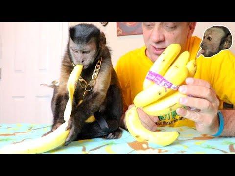 capuchin-monkey-banana-time!