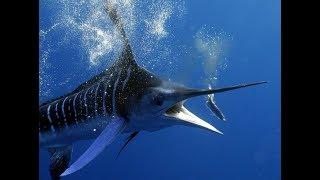 Опасные обитатели океанов.Морские глубины.Документальный фильм HD