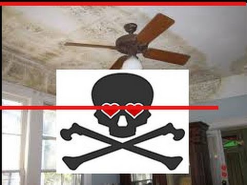 mold-removal-sacramento---(877)-598-7097---mold-remediation-and-mold-inspection