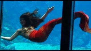 Live Little Mermaid show at Weeki Wachee Springs - Highlights