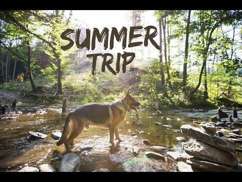 Summer trip / German shepherd Denis ♥