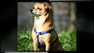 Dog Training Vista Ca Dog Obedience Training 92084