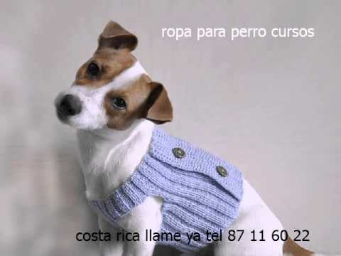 ropa para perro costa rica - YouTube