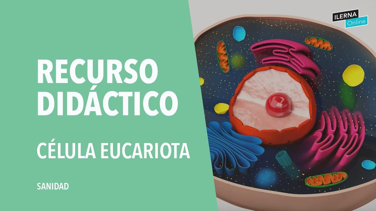 La Célula Eucariota Partes Y Funciones Youtube