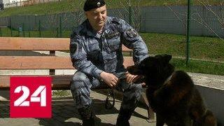 Всегда в отличном настроении и в любое время готовы к работе: трудовые будни полицейских собак - Р…