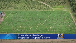 Corn Maze Marriage Proposal At Upstate Farm