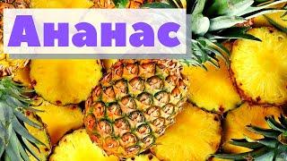 Как выращивают и собирают ананасы | How harvested pineapples