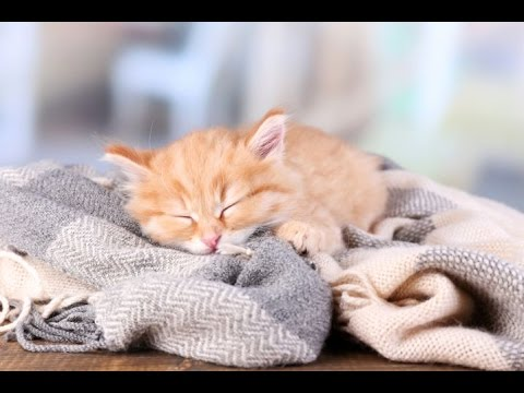 Relaxing Sleep Music, Calm Music, Soft Music,  Instrumental Music, Sleep Meditation, 8 Hours, ☯2678