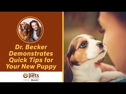 Dr. Becker Demonstrates Quick Tips For Your New Puppy
