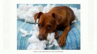 Dog Boarding and Training Schaumburg (847) 836-2111