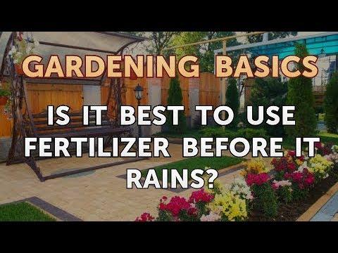 Fertilize Plants Before Or After Rain Mycoffeepot Org