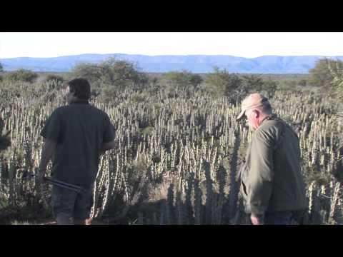 African Hope Hunting Safaris