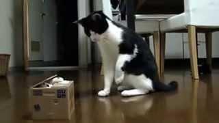 кот и коробка с сюрпризом(Самые смешные видео-ролики со всего интернета! Подписывайтесь на наш канал,смейтесь вместе с нами! если..., 2015-03-14T19:10:35.000Z)