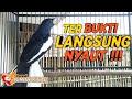 Super Gacor Main Ekor Jamin Kacer Poci Apapun Terpancing Ikut Nyaut  Mp3 - Mp4 Download