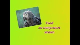 Уход за попугаями жако  Всё о пернатом друге
