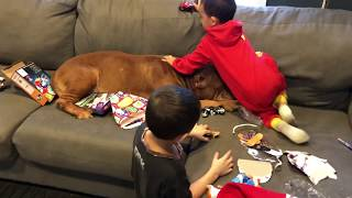One patient pit bull loves kids 💕💕