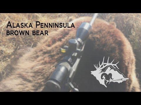 S10 E20 - Alaskan Penninsula Brown Bear