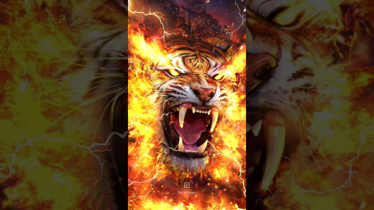 Angry Fire Tiger Live Wallpaper Youtube