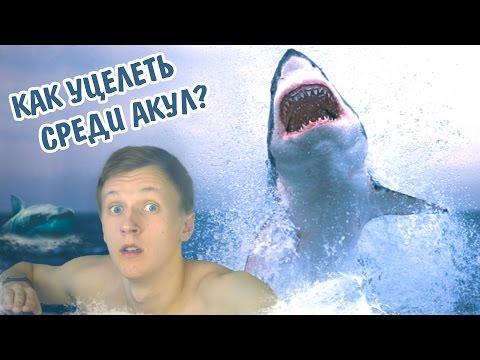 Как выжить среди акул харви маккей