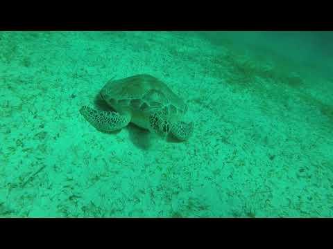 British Virgin Islands Turtle Diving
