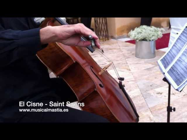 chelo y arpa - El cisne - Musica Bodas Archena Ulea Totana Mula Calasparra Murcia Musical Mastia