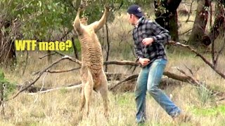 Ozzy Man Reviews: Man Punches Kangaroo