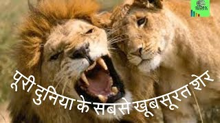 World best pics lions