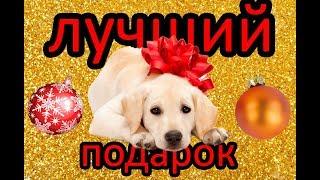 Подарили собаку на Новый год ! Подборка реакций