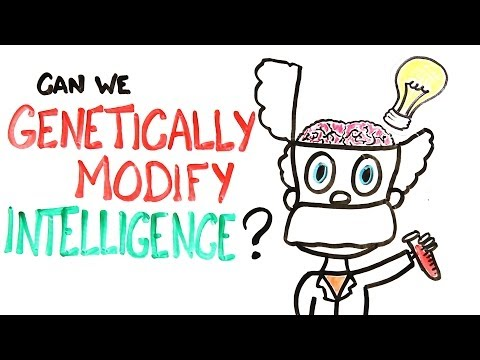 Can We Genetically Improve Intelligence?