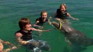 Ocho Rios, Jamaica -  Dolphin Swim & Dunn's River Falls