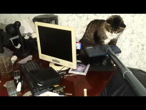 видео: Кот выбросился в окно от пылесоса
