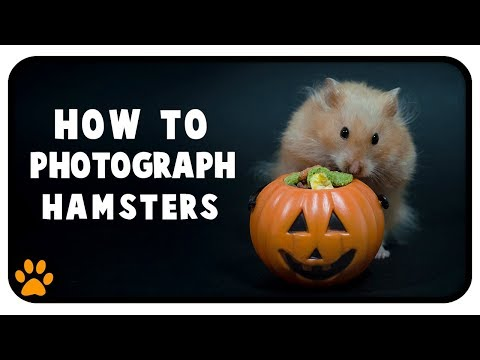 How To Photograph Hamsters & Other Pets | Halloween Photoshoot