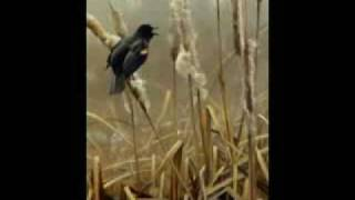 Blackbird by Jeff Beck
