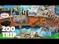 TRAVEL VLOG: Beautiful New Zealand  | Kids At The Zoo | Animals At The Zoo | Learn ZOO Animals Names