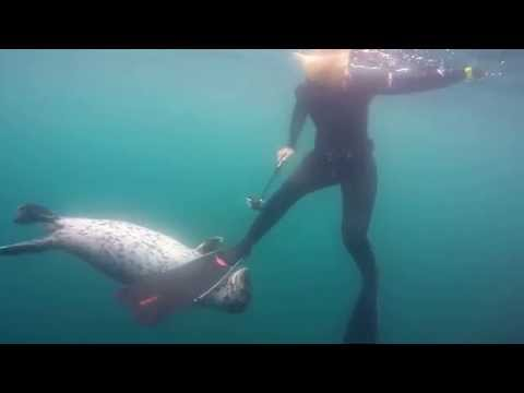 San Diego Free Diving with harbor seal and Scuba Diver Girls the Kelp Forest