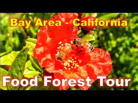 CALIFORNIA BAY AREA FOOD FOREST TOUR | Repairing GIRDLED Apple Tree | PRUNING Damaged Branches