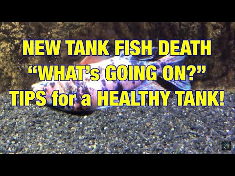 New Tank Fish Death: