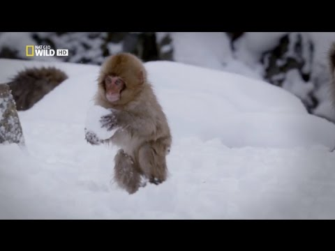 Nat Geo Wild - Secrets of the wild - Going deep / Тайните на
