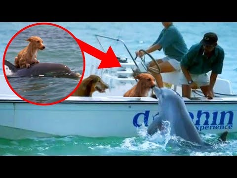 Most UNBELIEVABLE Dolphin Rescue Stories!
