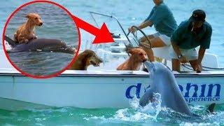 Most UNBELIEVABLE Dolphin Rescue Stories!