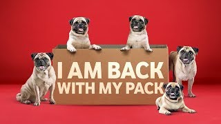The Pug is back with its pack! #StrongerTogether by adding a tower every hour