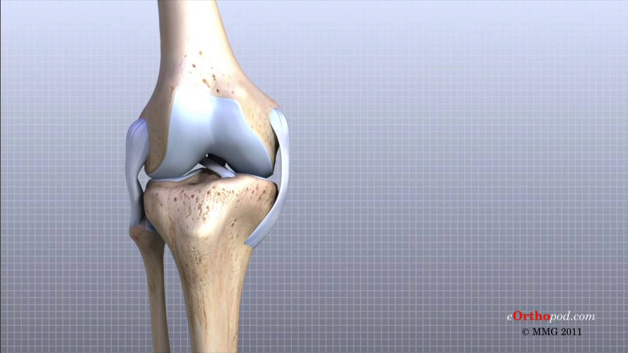 Knee Anatomy 3D Tutorial - YouTube