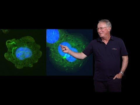 Hidde Ploegh (Boston Children's Hospital) 2: Unusual Antibody Fragments: The Camelid Nanobodies